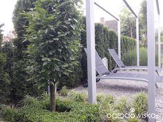 Ogrodowy powrót do dzieciństwa. - strona 1586 - Forum ogrodnicze - Ogrodowisko Arch, Outdoor Structures, Garden, Gardens, Longbow, Garten, Lawn And Garden, Wedding Arches, Gardening