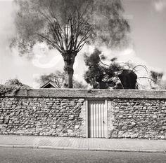 I love the idea of a secret garden.   Walled Garden; Winchelsea 1979. Fay Godwin. (c)The British Library Board