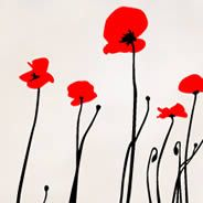 Bi-Color Poppies wall decal.  (many more on this site.) ..z