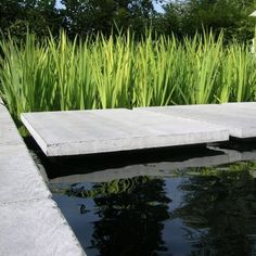 Natural swimming pool with water cleaning plants.