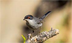 Gran curso de fotografía de Aves - Online -