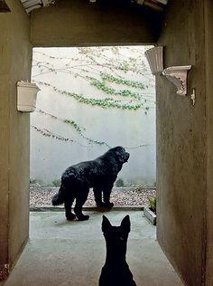 """Dentro da casa dos cachorros, fica o """"banheiro"""": sobre uma camada de terra, foi colocada outra de areia. Por cima de tudo, seixos. A composição absorve o xixi e minimiza o odor. A sujeira retida na superfície é removida com a pá. É preciso trocar areia e seixos a cada 3 meses"""