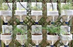 Recycled milk bottle wall planters