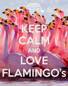 KEEP CALM AND LOVE FLAMINGO's
