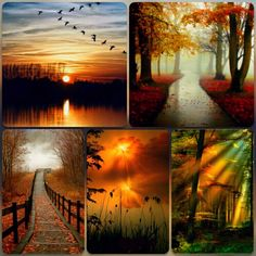 Fall Mood Colors, Colours, Collages, Beautiful Places, Beautiful Pictures, Color Collage, Autumn Scenes, Beautiful Collage, Jolie Photo