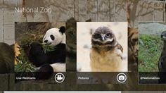 National Zoo App // Based on the popular National Zoo app for Windows Phone, the National Zoo app brings the animals of the National Zoo to your Windows 8 desktop! Features  • Live Web Cams • Get Twitter updates • View pictures from Flickr • See upcoming events happening at the National Zoo • Share Photos and Tweets