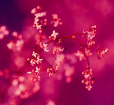 1446 - Inside of a Pink Crystal by boxx2genetica