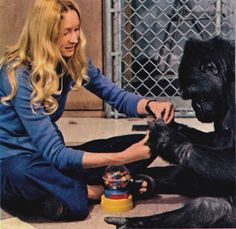 Conversations with a gorilla. National Geographic, October 1978