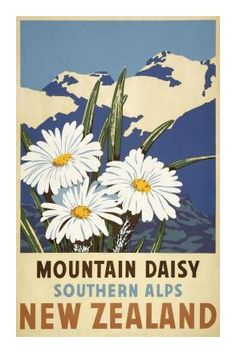 Vintage Travel Poster - Southern Alps - Mountain Daisy - New Zealand - Artist unknown. New Zealand Art, New Zealand Travel, Poster Vintage, Vintage Travel Posters, Retro Vintage, Posters Australia, Tourism Poster, Nz Art, Kunst Poster
