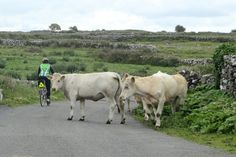 Yield to the locals when you join VBT on a biking vacation in #Ireland.