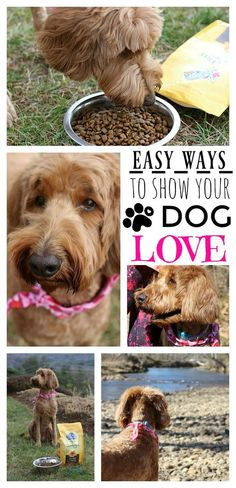 3 Easy Ways to Show Your Dog Love - The Adventures of J-Man and Millerbug AD