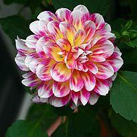 Que tal resgatar as plantas e flores mais frequentes nos jardins da vovó? Aquelas que muitas vezes hoje são consideradas fora de moda, ou raras de encontra