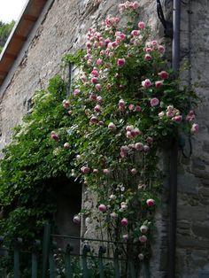 rosenbogen mit kletterrosen ein genuss f rs auge und die seele rosenbogen kletterrosen und. Black Bedroom Furniture Sets. Home Design Ideas