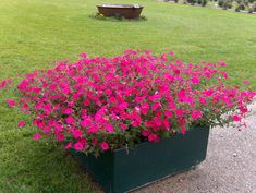 flowers for container garening in full sun - Google Search