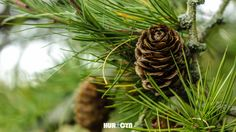 Micro tree, Using Canon and Canon, Plant Leaves, Amazing, Plants, Photography, Photograph, Cannon, Fotografie, Photoshoot