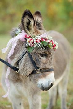Donkey with flower crown.so cute Baby Donkey, Cute Donkey, Mini Donkey, Donkey Pics, Donkey Donkey, Cute Baby Animals, Farm Animals, Animals And Pets, Funny Animals