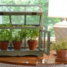 Tabletop Greenhouse BNOTP