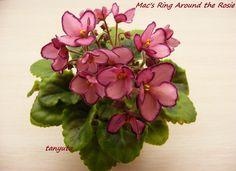 Mac's Ring Around the Rosie
