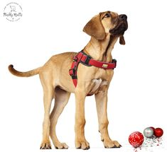 Manoa Vario Quick Light Dog Harnesses - Muddy Mutts and Pocket Pups Luxury Christmas Presents, Collar And Leash, Collars, Easy Clip, Grey Dog, Cleaning Materials, Mesh Material, Dog Harness, Four Legged