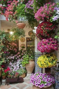 Container garden in full bloom and bright colors