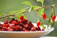 Olá pessoal!! Eu adoro goji berry. Assim, compartilho com vocês seus benefícios. A alta concentração de vitamina C e a grande quantidade das vitaminas B1, B2 e B6 são atrativos da fruta. Rica em po…
