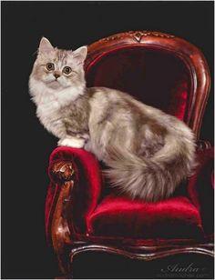 Heizung im Bad   Unsere Katzen   Pinterest   Im and Dr. who