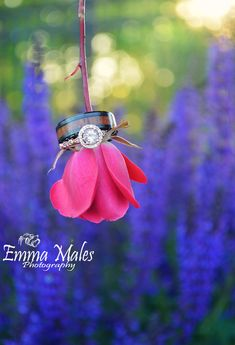 Photo collection by Emma Males Photography