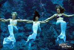 Happy Friday! The mermaids will perform Saturday-Monday for the Labor Day weekend. We hope you have a safe and happy holiday weekend. #LoveWeeki