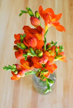 Ombre freesia: from way before ombre became hot. These have the sweetest fresh scent that can liven up an entire room.