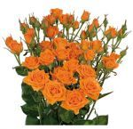 Get fresh and beautiful wholesale spray rose flowers from Whole Blossoms. These flowers are available in multiple colors and lengths. Call us today at 1-877-969-2566 to get rose flowers at your door step.  For more information visit : http://buyweddingflowersonline.weebly.com/blog/all-that-you-need-to-know-about-spray-roses