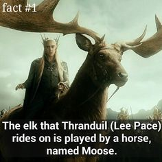 First post  03/05/2015  Hope you enjoy all the facts  You maybe know me for my other Two accounts @thehobbittexts @deanogorman_ ❤ #thehobbit #thranduil #elk