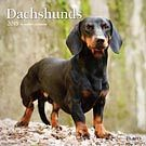 Dachshunds 2015 Wall Calendar: 9781465032034   Dachshunds   DogBreedStore.com