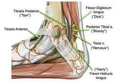 """www.health-gossip.com Easiest way to remember structure passing through medial retinaculum of foot. """" Tom, Dick, Harry """" means  """" Tibialis posterior, flexor Digitorum longus, flexor Hallucis longus """" very important for physio and other health professionals. #retinaculum #foot #tibialis #digitorum #hallucis"""