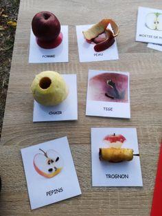découverte et imagier sur la pomme