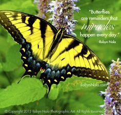 """Butterflies are reminders that miracles happen every day."" –Robyn Nola"