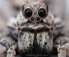 Очень страшный паук) Funny Pictures, Funny Photos, Funny Pics, Fanny Pics, Funny Images, Hilarious Pictures