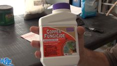⟹ Copper fungicide   Bonide   Product overview Garden Soil, Gardening, Buy Seeds, Pepper Plants, Plant Health, Permaculture, Copper, Stuffed Peppers, Fruit