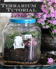 Vintage looking terrarium made out of glass cracker jar from Walmart