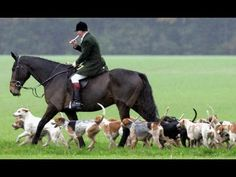 Fox Hunters Abusing Horses - Wrong Way To Get Across Water - Pretty Helmets - YouTube