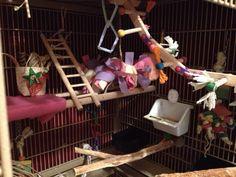 bird cage arrangement - perch variety