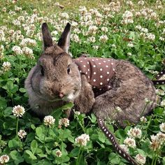 Fluffy Bunny Flaunts A Polka-Dot Halter Top..I just died. want it now. but my bunny does not. dangit.
