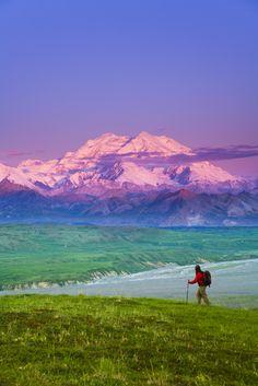 view of Mt McKinley in background Denali National Park Interior Alaska summer