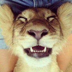 Happy lion cub