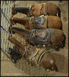 A Line of Saddled Horses From a 'Bird's Eye View.'