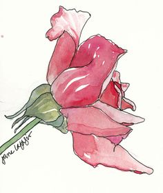 from my sketchbook - Lesson 4: Flowers - Sketching & Watercolor: Journal Style ~ November 2014