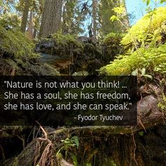 """#quoted #quote """"Nature is not what you think."""" How many are really in tune with what nature speaks when they do not know what wild chickens eat? We can learn a lot from nature if we only stopped to think what atrocities are being done and ditched in the environment. https://www.facebook.com/discovertheforest/photos/a.243009197093.141883.115883522093/10153456115932094/?type=1"""