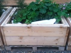 Raised bed from scaffolding boards, lined with builders bag at Mobile Garden City. On a pallet so it can easily be lifted and moved to a new site.