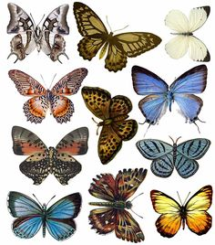 okay now I'm tierd of butterflies