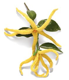 "Ylang-Ylang Knitted Flower from the book, ""Noni Flowers"""