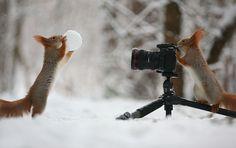 Esquilo parece operar uma câmera neste divertido ensaio fotográfico